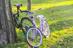 在公园道路的自行车  库存图片