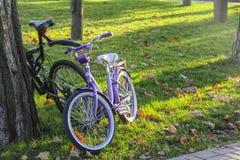在公园道路的自行车  免版税库存照片