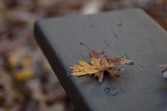 在公园长椅的两片橡木叶子在秋天 免版税库存照片
