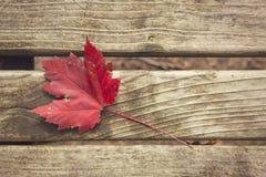 在公园长椅的红色叶子在秋天 库存图片