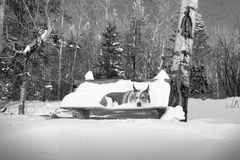 在公园长椅的雪狗 免版税库存图片