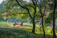 在公园长椅的Est 库存图片