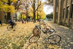 在公园骑自行车在秋天需要在东京大学 库存照片