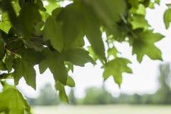 在公园-叶子 免版税库存照片