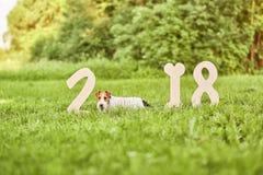 在公园2018新年greetin的可爱的愉快的狐狸狗狗 库存图片