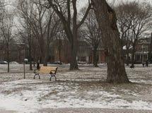 在公园 免版税库存图片