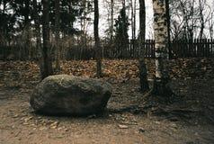 在公园 图库摄影