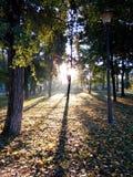 在公园 免版税图库摄影