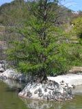 在公园de la帕路玛Benalmadena西班牙的乌龟 免版税库存照片