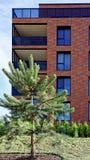 在公寓现代建筑复合体的杉树  免版税库存图片