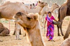 在公平普斯赫卡尔的骆驼,拉贾斯坦,印度的清早活动 免版税库存图片