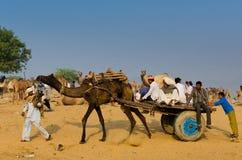在公平普斯赫卡尔的骆驼,拉贾斯坦,印度的清早活动 库存图片