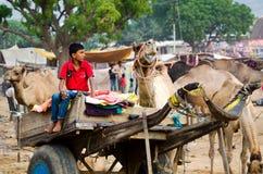 在公平普斯赫卡尔的骆驼,拉贾斯坦,印度的骆驼推车 免版税图库摄影