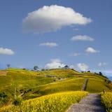 在六十座石山,富里乡,花莲, Ta的橙色黄花菜花 免版税库存图片