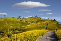 在六十座石山,富里乡,花莲, Ta的橙色黄花菜花 免版税库存照片