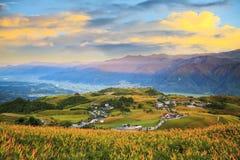在六十座石山,富里乡,花莲, Ta的橙色黄花菜花 库存图片