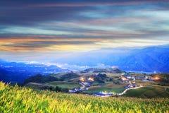 在六十座石山,富里乡,花莲, Ta的橙色黄花菜花 免版税图库摄影