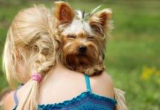 在六岁的女孩肩膀的约克夏狗  照相机查找 免版税库存照片