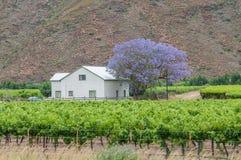 在六角形的河谷种田房子和葡萄园 免版税库存图片