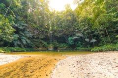 在兰卑尔山国家公园,婆罗洲,马来西亚密集和umid雨林掩藏的梦想的多彩多姿的自然水池  概念 免版税图库摄影