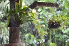 在兰花的雨 免版税库存图片