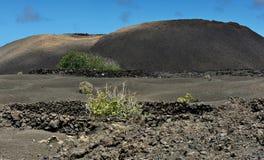 在兰萨罗特岛海岛,加那利群岛,西班牙的火山的山 免版税库存照片