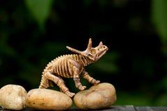 在关闭的恐龙骨样式 免版税库存照片