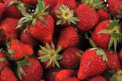 在关闭的成熟草莓 库存图片
