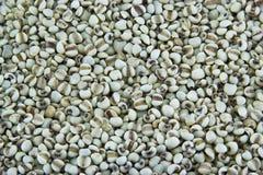 在关闭的白色小米种子射击 库存图片