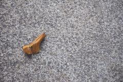 在具体地板/地面上的布朗叶子 免版税库存照片