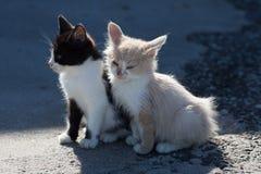 在具体码头的两只无家可归的小猫在海港 库存照片