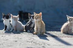 在具体码头的无家可归的小猫在海港 库存图片