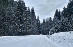 在具球果森林中的积雪的路 库存照片