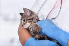 在兽医关心专家的胳膊的小小猫 免版税库存图片
