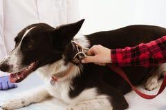 在兽医的逗人喜爱的狗 图库摄影