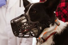 在兽医的逗人喜爱的狗 免版税库存照片