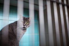 在兽医诊所笼子的猫等待的治疗  免版税库存图片