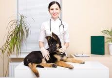 在兽医的小狗 库存照片