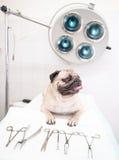 在兽医诊所的狗在医疗工具附近 库存图片