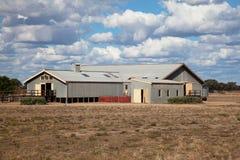 在内地剪流洒的绵羊的澳大利亚 免版税库存照片
