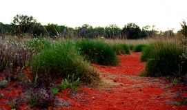 在内地沙漠路径 库存图片