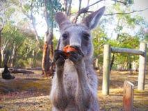 在内地澳大利亚-阻止在湖Argyle附近的斑点 图库摄影