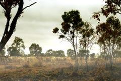 在内地澳大利亚 免版税库存照片