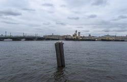 在内娃河的一只孤立鸥 库存图片