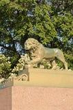 在内娃河的海军部堤防的狮子雕象在圣彼德堡,俄罗斯 库存照片