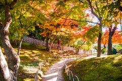在冈山城堡的秋叶停放,日本 库存照片