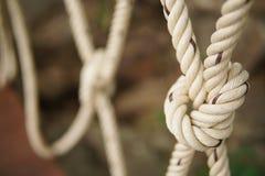 在冒险的一个结栓的白色绳索 绳索一起被栓的结线特写镜头  免版税库存图片