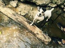 在冒险的小狗 库存图片