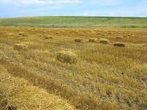 在农业被收获的wheatfield的秸杆大包 免版税图库摄影