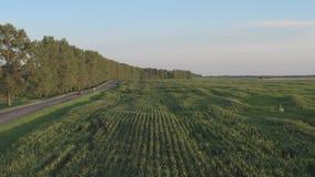 在农业边的直路 鸟瞰图灰色驾车在乡下公路 影视素材